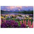 """""""Долина цветов"""" 40*50 см картина-раскраска по номерам на холсте"""