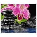 """40*50 см """"Орхидея"""" картина-раскраска по номерам на холсте"""