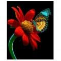 """40*50 см """"На цветке"""" картина-раскраска по номерам на холсте"""